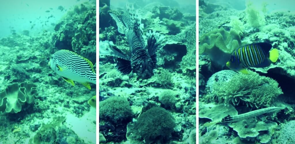 nusa_llembongan_fish